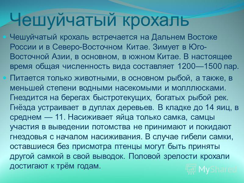 Чешуйчатый крохаль Чешуйчатый крохаль встречается на Дальнем Востоке России и в Северо-Восточном Китае. Зимует в Юго- Восточной Азии, в основном, в южном Китае. В настоящее время общая численность вида составляет 12001500 пар. Питается только животны