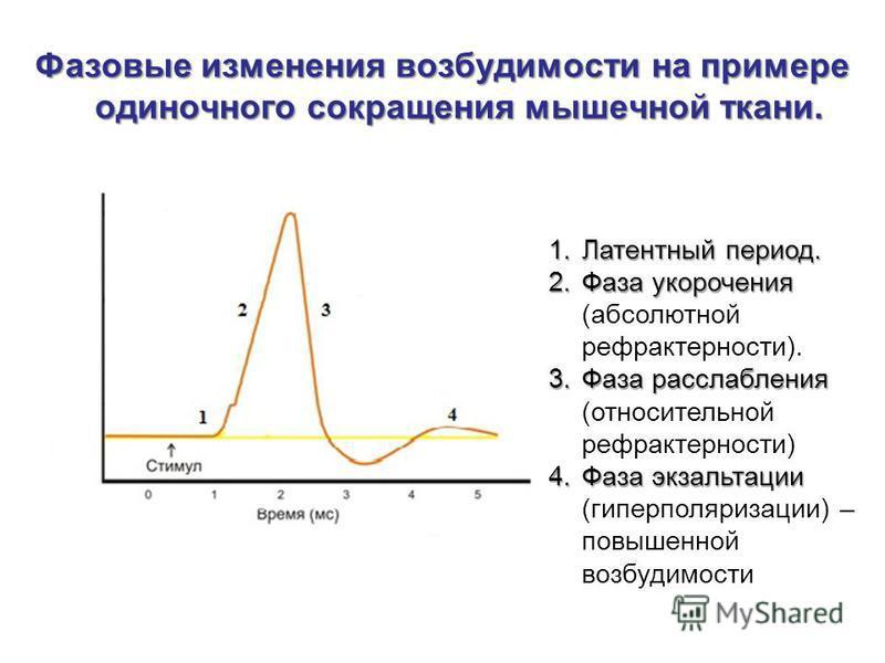 Ответы по всему курсу Физиологии человека - n1doc