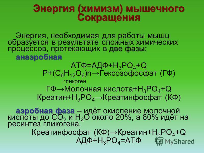 Энергия (химизм) мышечного Сокращения две фазы: Энергия, необходимая для работы мышц образуется в результате сложных химических процессов, протекающих в две фазы:анаэробная АТФ=АДФ+Н 3 РО 4 +Q Р+(С 6 Н 12 О 6 )n Гексозофосфат (ГФ) гликоген ГФМолочная