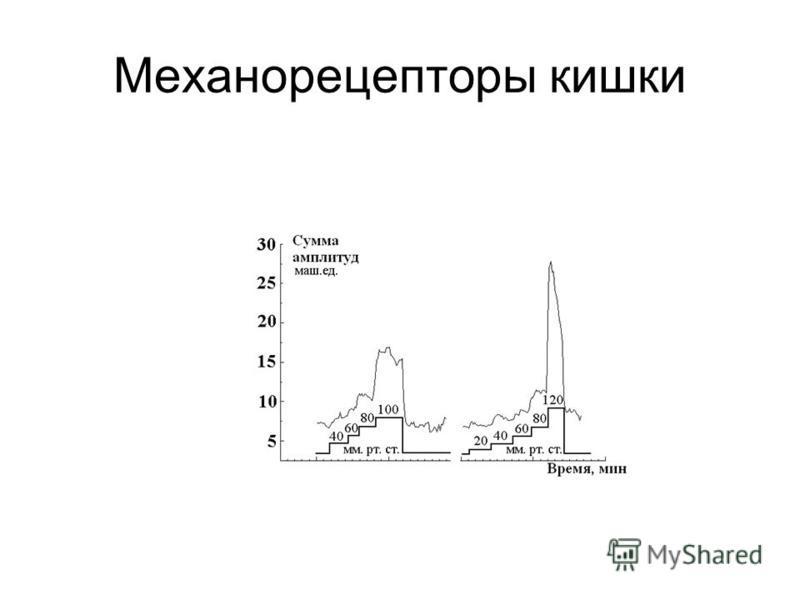 Механорецепторы кишки