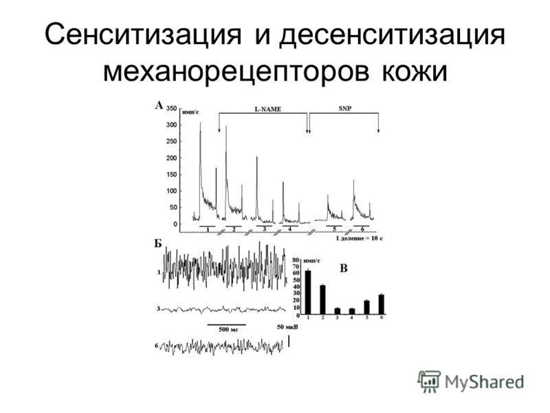 Сенситизация и десенситизация механорецепторов кожи