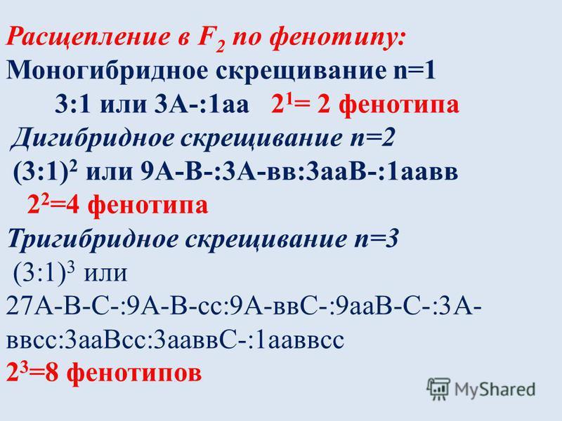 Расщепление в F 2 по фенотипу: Моногибридное скрещивание n=1 3:1 или 3А-:1 а 2 1 = 2 фенотипа Дигибридное скрещивание n=2 (3:1) 2 или 9А-В-:3А-вв:3 аВ-:1 авв 2 2 =4 фенотипа Тригибридное скрещивание n=3 (3:1) 3 или 27А-В-С-:9А-В-сс:9А-ввС-:9 аВ-С-:3А