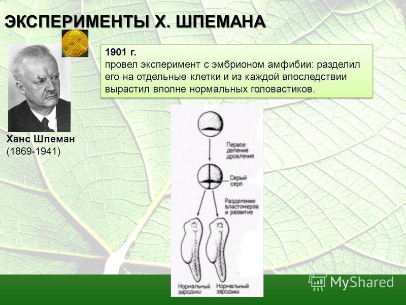 ЭКСПЕРИМЕНТЫ Х. ШПЕМАНА 1901 г. провел эксперимент с эмбрионом амфибии: разделил его на отдельные клетки и из каждой впоследствии вырастил вполне нормальных головастиков. 1901 г. провел эксперимент с эмбрионом амфибии: разделил его на отдельные клетк