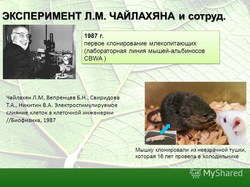 ЭКСПЕРИМЕНТ Л.М. ЧАЙЛАХЯНА и сотрут. 1987 г. первое клонирование млекопитающих (лабораторная линия мышей-альбиносов CBWA ) 1987 г. первое клонирование млекопитающих (лабораторная линия мышей-альбиносов CBWA ) Мышку клонировали из невзрачной тушки, ко