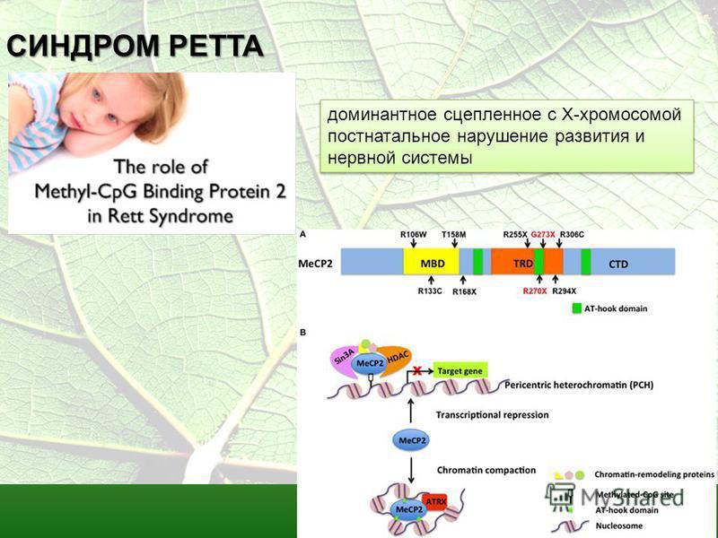 СИНДРОМ РЕТТА доминантное сцепленное с Х-хромосомой постнатальное нарушение развития и нервной системы