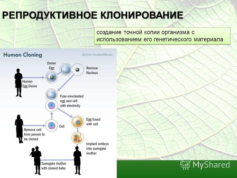 РЕПРОДУКТИВНОЕ КЛОНИРОВАНИЕ создание точной копии организма с использованием его генетического материала