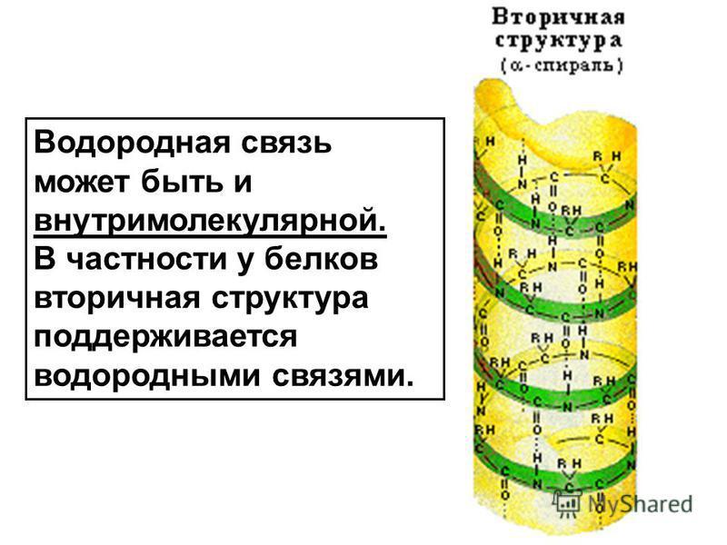 Водородная связь может быть и внутримолекулярной. В частности у белков вторичная структура поддерживается водородными связями.