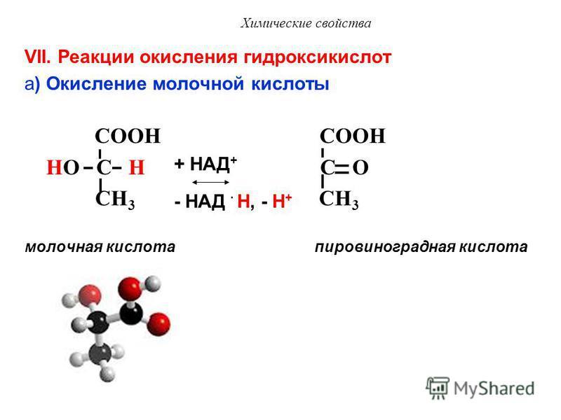 Химические свойства Окисление дикарбоновых кислот in vivo: янтарная кислота фумаровая кислота