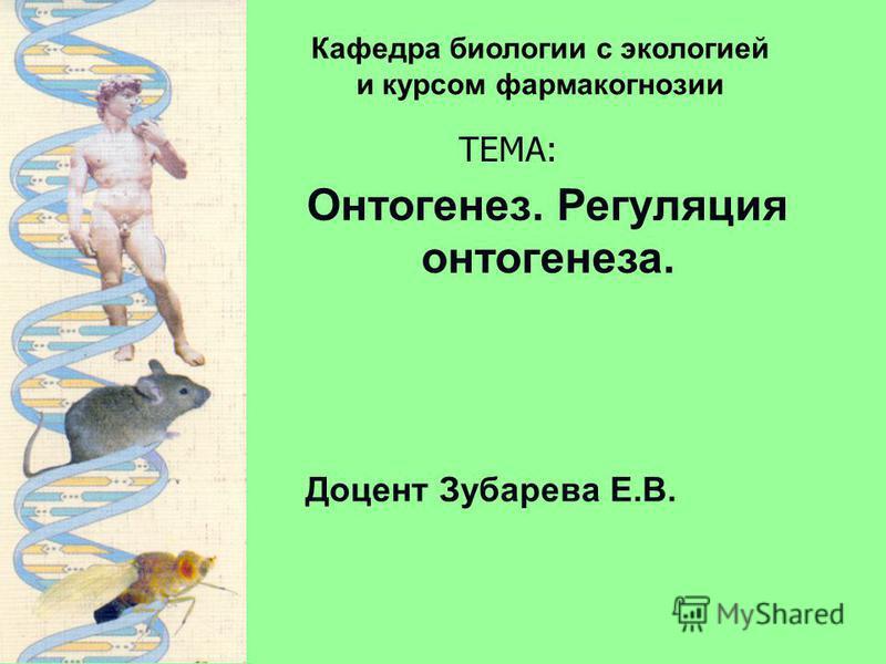 Доцент Зубарева Е.В. Кафедра биологии с экологией и курсом фармакогнозии ТЕМА: Онтогенез. Регуляция онтогенеза.