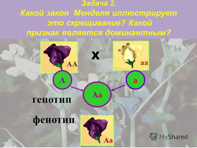 Решение Согласно формуле для определения числа гамет N=2 n гаметы будут такими: 1. А и в; 2. А и а; 3.МN, Мn, мN и мп; 4.DCF, DcF, DCf и Dcf.