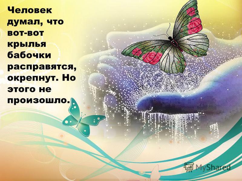 Человек думал, что вот-вот крылья бабочки расправятся, окрепнут. Но этого не произошло.