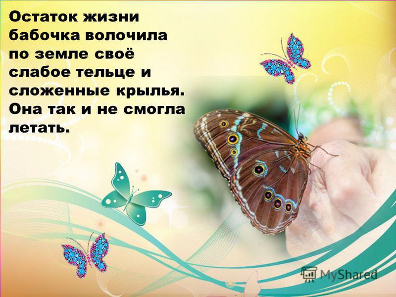 Остаток жизни бабочка волочила по земле своё слабое тельце и сложенные крылья. Она так и не смогла летать.