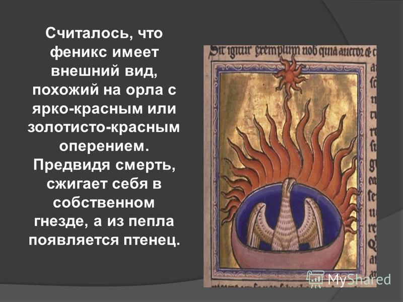 Считалось, что феникс имеет внешний вид, похожий на орла с ярко-красным или золотисто-красным оперением. Предвидя смерть, сжигает себя в собственном гнезде, а из пепла появляется птенец.