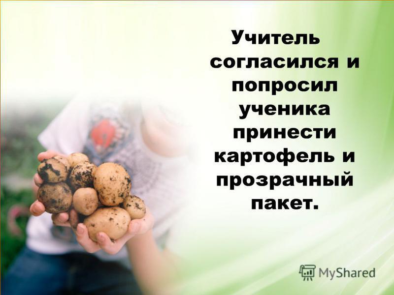Учитель согласился и попросил ученика принести картофель и прозрачный пакет.