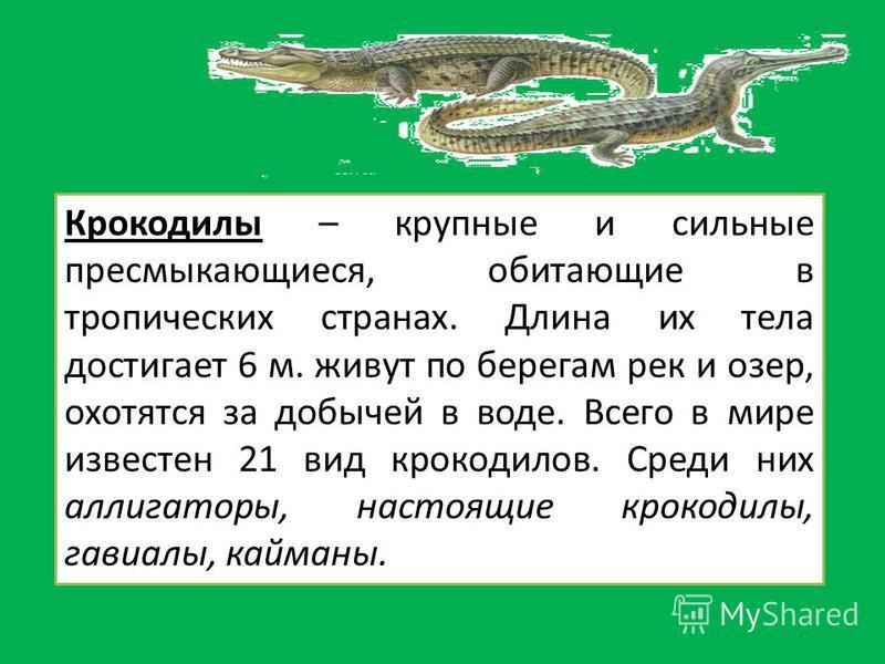 Крокодилы – крупные и сильные пресмыкающиеся, обитающие в тропических странах. Длина их тела достигает 6 м. живут по берегам рек и озер, охотятся за добычей в воде. Всего в мире известен 21 вид крокодилов. Среди них аллигаторы, настоящие крокодилы, г