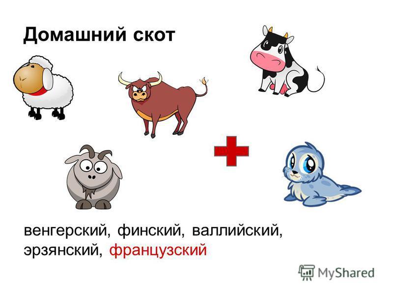 Домашний скот венгерский, финский, валлийский, эрзянский, французский