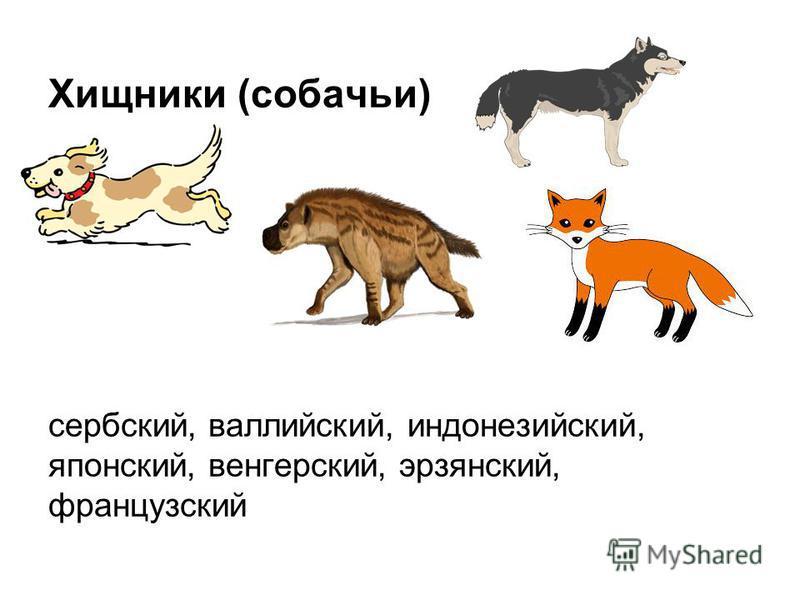 Хищники (собачьи) сербский, валлийский, индонезийский, японский, венгерский, эрзянский, французский