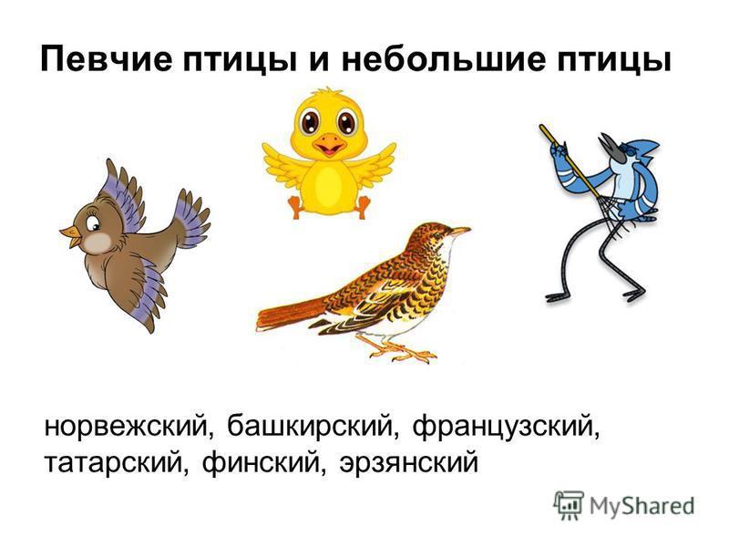 Певчие птицы и небольшие птицы норвежский, башкирский, французский, татарский, финский, эрзянский