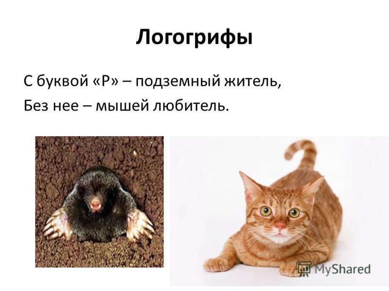 Логогрифы С буквой «Р» – подземный житель, Без нее – мышей любитель.