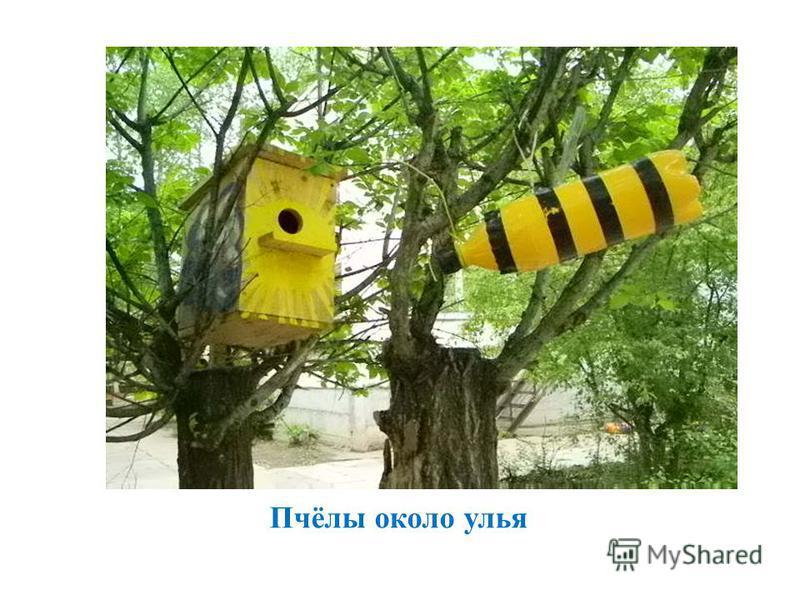 Пчёлы около улья