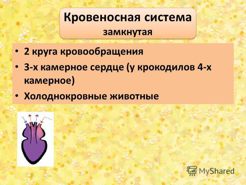 2 круга кровообращения 3-х камерное сердце (у крокодилов 4-х камерное) Холоднокровные животные Кровеносная система замкнутая Кровеносная система замкнутая