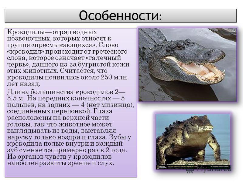 Особенности : Крокодилы отряд водных позвоночных, которых относят к группе «пресмыкающихся». Слово «крокодил» происходит от греческого слова, которое означает «галечный червь», данного из-за бугристой кожи этих животных. Считается, что крокодилы появ