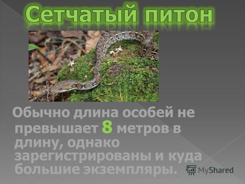 Обычно длина особей не превышает 8 метров в длину, однако зарегистрированы и куда большие экземпляры.