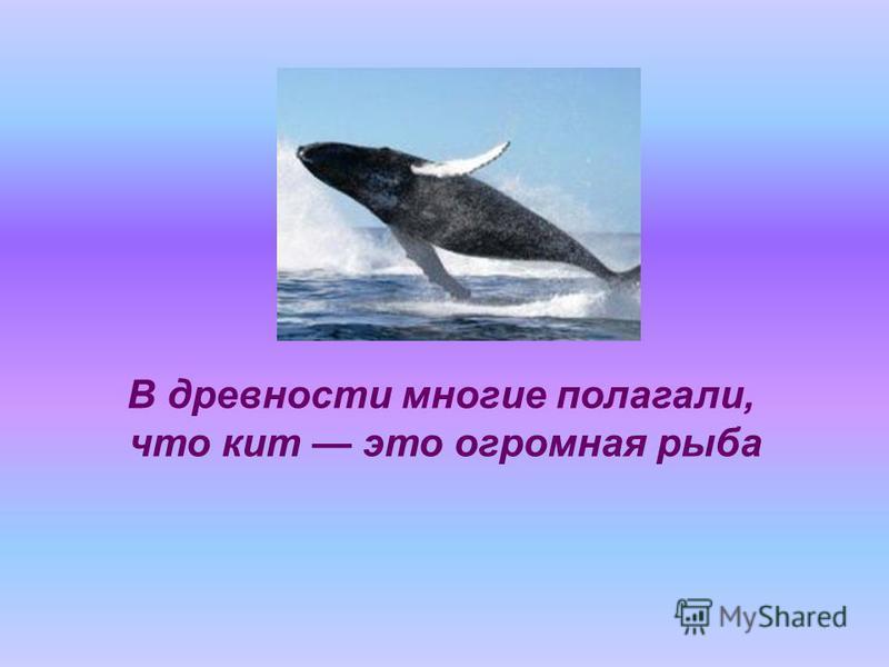 В древности многие полагали, что кит это огромная рыба