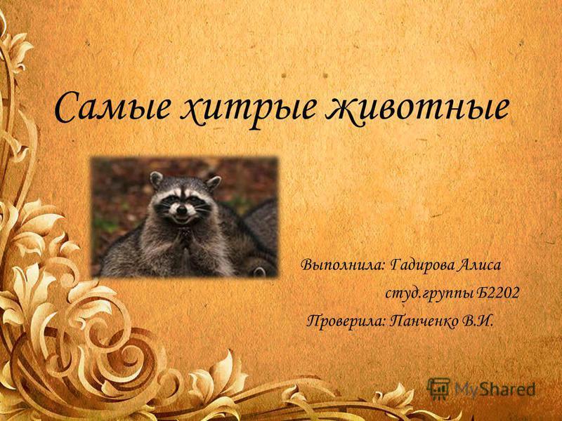 Самые хитрые животные Выполнила: Гадирова Алиса студ.группы Б2202 Проверила: Панченко В.И.