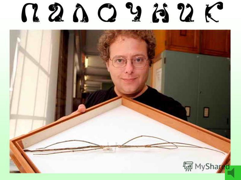 3 9 4 1 5 7 Реши цепочку и ответь: - Какое насекомое самое длинное на свете? палочник– 7