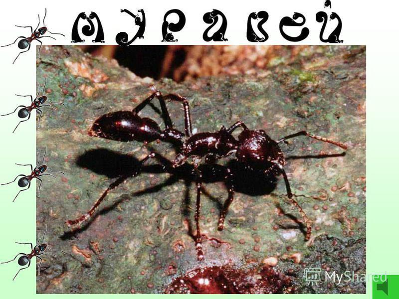 6 9 5 1 7 8 Реши цепочку и ответь: - Какое животное самое сильное на свете? муравей - 8