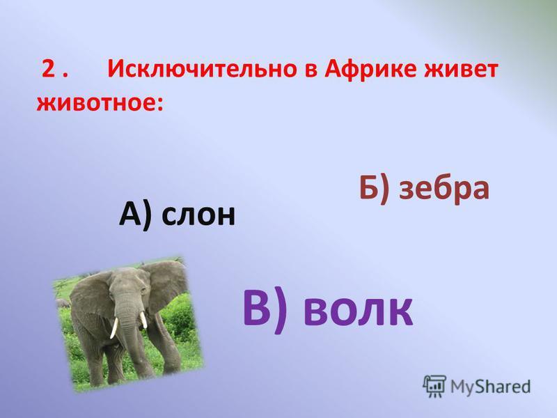 2. Исключительно в Африке живет животное: А) слон Б) зебра В) волк