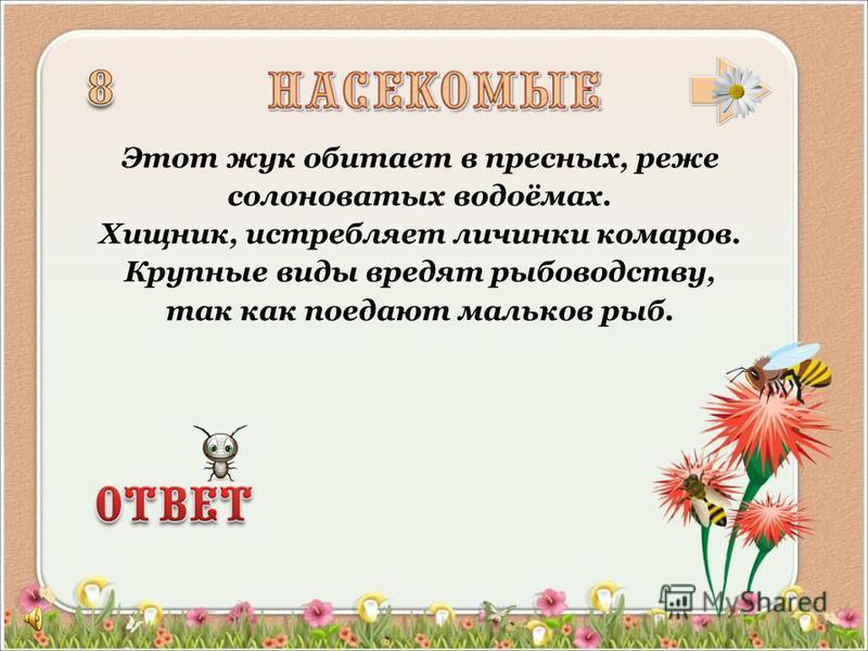 Жук – вредитель хлебных злаков в Евразии. Тёмно-каштановый, длиной 13 – 15 мм. Питается недозрелым зерном, личинки – корнями.