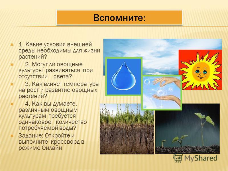 Вспомните: 1. Какие условия внешней среды необходимы для жизни растений? 2. Могут ли овощные культуры развиваться при отсутствии света? 3. Как влияет температура на рост и развитие овощных растений? 4. Как вы думаете, различным овощным культурам треб