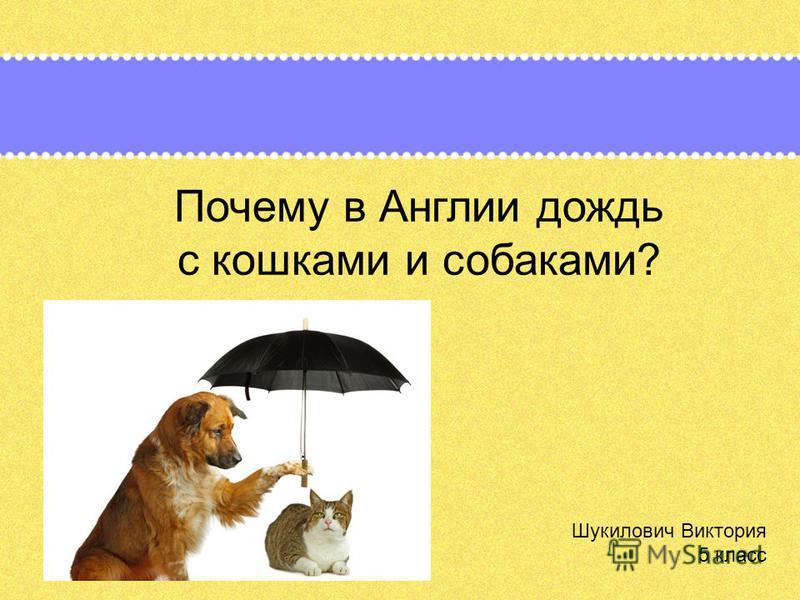 Почему в Англии дождь с кошками и собаками? Шукилович Виктория 5 класс