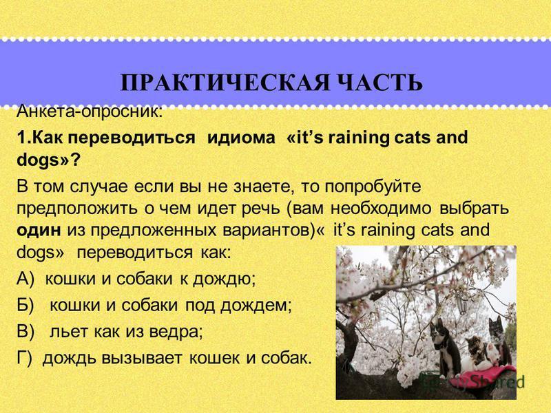 ПРАКТИЧЕСКАЯ ЧАСТЬ Анкета-опросник: 1. Как переводиться идиома «its raining cats and dogs»? В том случае если вы не знаете, то попробуйте предположить о чем идет речь (вам необходимо выбрать один из предложенных вариантов)« its raining cats and dogs»