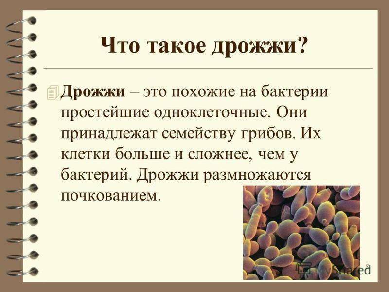Что такое дрожжи? 4 Дрожжи – это похожие на бактерии простейшие одноклеточные. Они принадлежат семейству грибов. Их клетки больше и сложнее, чем у бактерий. Дрожжи размножаются почкованием. 8