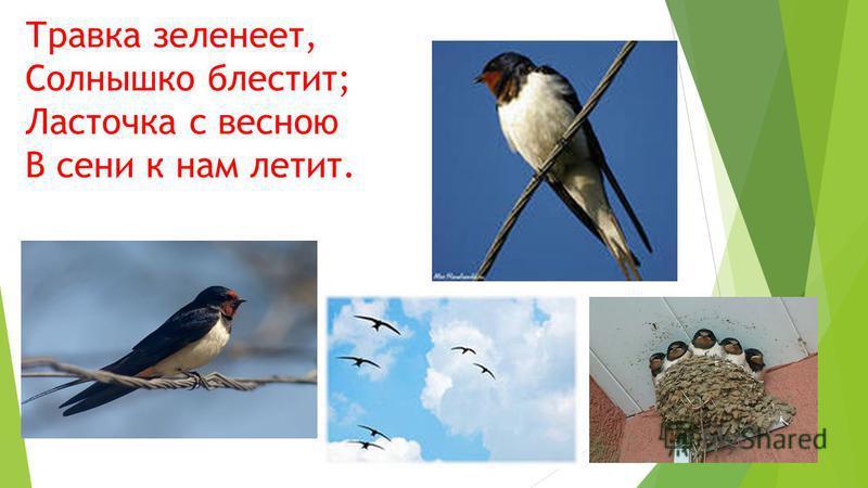 Травка зеленеет, Солнышко блестит; Ласточка с весною В сени к нам летит.