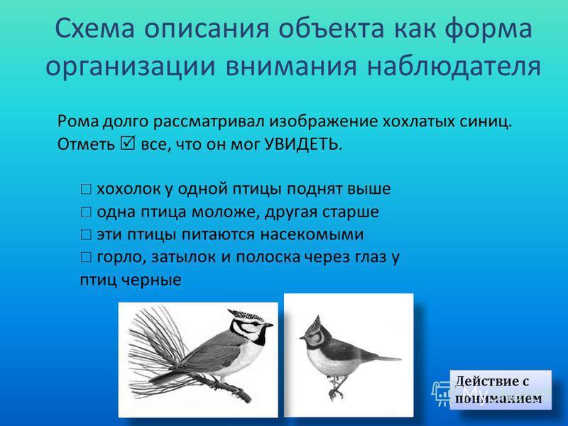 Вера увидела на кормушке птицу. Выбери и отметь признаки птицы. острый клюв пёстрая грудка темная шапочка белые крылья Формальный уровень