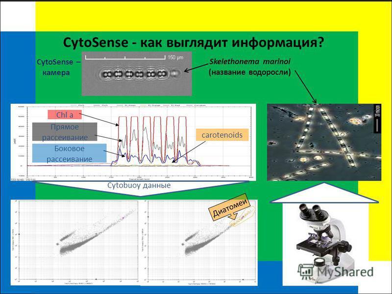 CytoSense - как выглядит информация? CytoSense – камера Skelethonema marinoi (название водоросли) Chl a Прямое рассеивание Боковое рассеивание carotenoids Cytobuoy данные Диатомеи