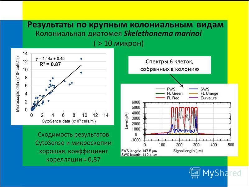 Результаты по крупным колониальным видам Колониальная диатомея Skelethonema marinoi ( > 10 микрон) Спектры 6 клеток, собранных в колонию Сходимость результатов CytoSense и микроскопии хорошая, коэффициент корреляции = 0,87