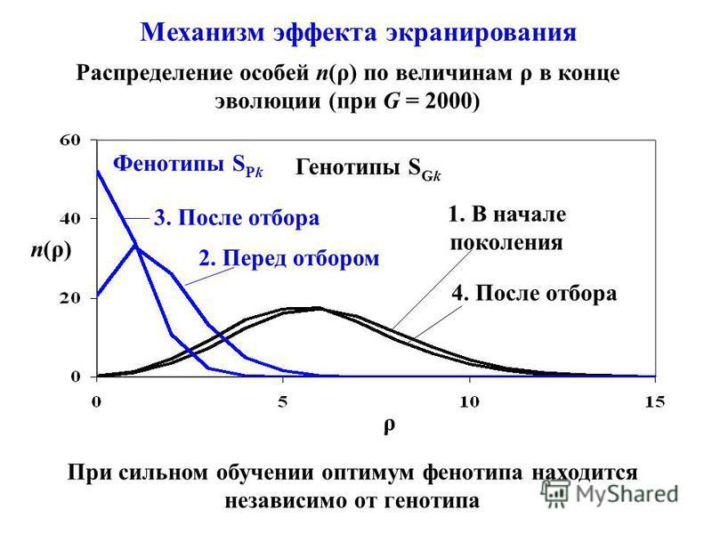 Механизм эффекта экранирования При сильном обучении оптимум фенотипа находится независимо от генотипа n(ρ) ρ Генотипы S Gk 1. В начале поколения 4. После отбора Фенотипы S Pk 3. После отбора 2. Перед отбором Распределение особей n(ρ) по величинам ρ в
