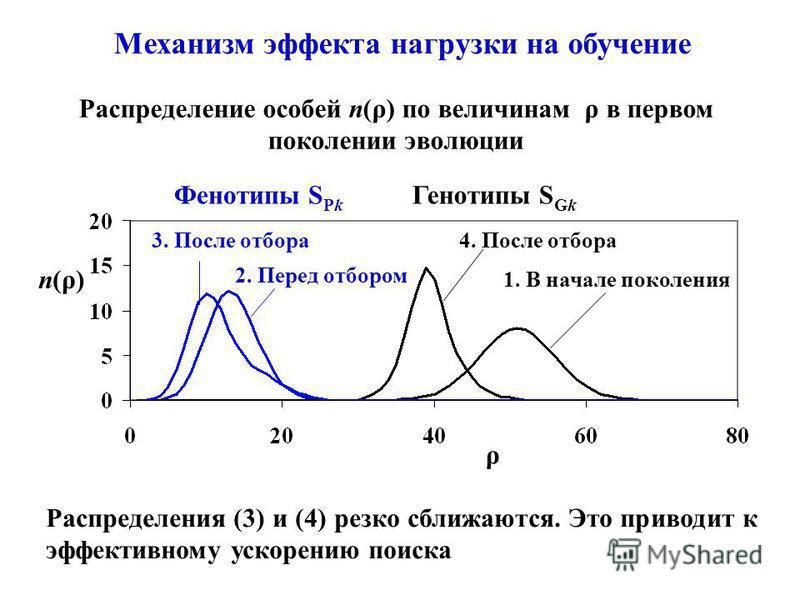 Механизм эффекта нагрузки на обучение Распределение особей n(ρ) по величинам ρ в первом поколении эволюции n(ρ) ρ Генотипы S Gk 1. В начале поколения 4. После отбора Фенотипы S Pk 3. После отбора 2. Перед отбором Распределения (3) и (4) резко сближаю