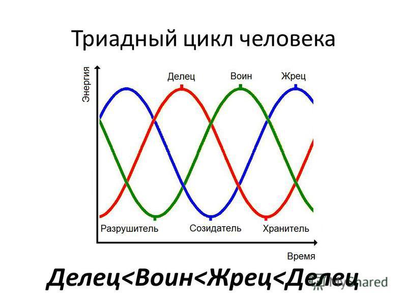 Триадный цикл человека Делец