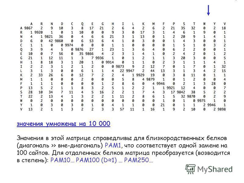 значения умножены на 10 000 Значения в этой матрице справедливы для близкородственных белков (диагональ >> вне-диагональ) PAM1, что соответствует одной замене на 100 сайтов. Для отдаленных белков матрица преобразуется (возводится в степень): PAM10… P