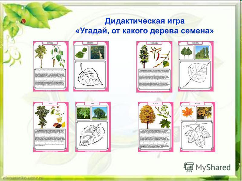 Дидактическая игра «Угадай, от какого дерева семена»