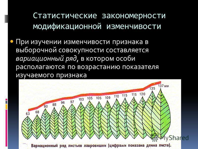 Статистические закономерности модификационной изменчивости При изучении изменчивости признака в выборочной совокупности составляется вариационный ряд, в котором особи располагаются по возрастанию показателя изучаемого признака
