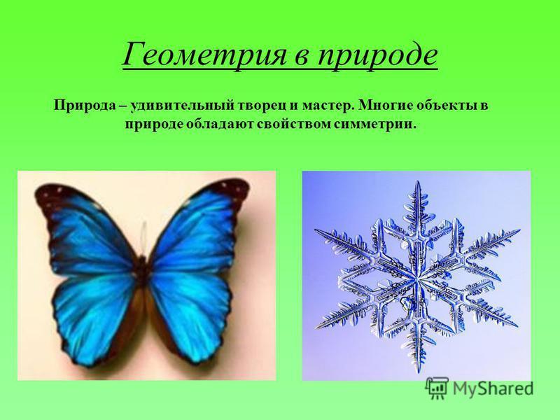 Геометрия в природе Природа – удивительный творец и мастер. Многие объекты в природе обладают свойством симметрии.