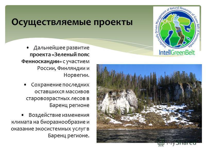 Осуществляемые проекты Дальнейшее развитие проекта «Зеленый пояс Фенноскандии» с участием России, Финляндии и Норвегии. Сохранение последних оставшихся массивов старовозрастных лесов в Баренц регионе Воздействие изменения климата на биоразнообразие и