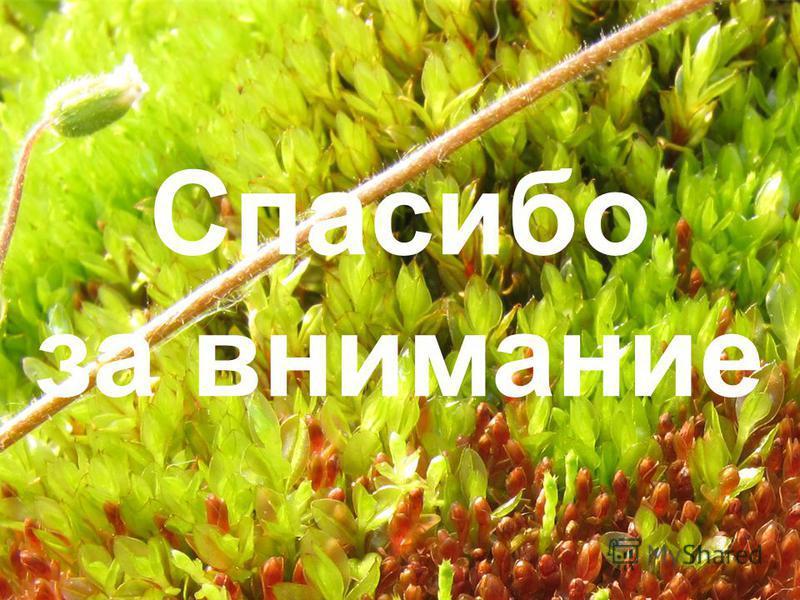 Спасибо за внимание В презентации использованы материалы презентаций М.С. Игнатова